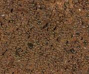 00267-1938-28-mm-limonite-oolite