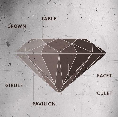 Diamond's anatomy