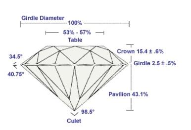 Diamond's anatomy 2