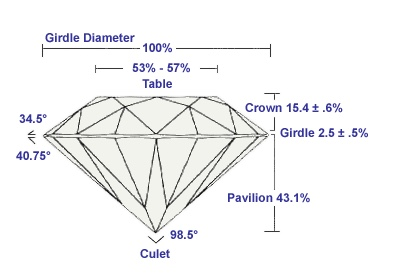 Diamond's anatomy 2